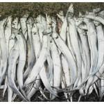 太刀魚の絶品レシピ5選!激ウマ!主婦でも簡単にさばく方法も紹介