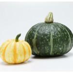 かぼちゃの栽培は簡単!家庭菜園初心者におすすめすのかぼちゃの品種とは?