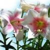 花粉が服に!落とし方は?安心してください!ご家庭にあるアレで簡単に落とせるんです。