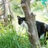 猫が家出!探し方は?ポスターでの呼びかけ、どれぐらいの効果がある?
