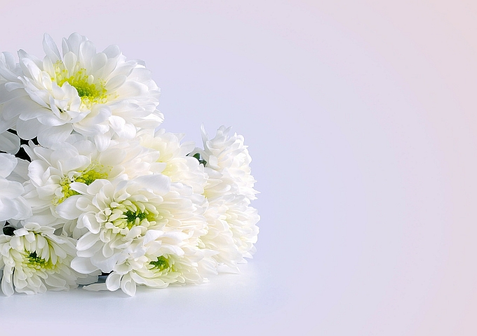 flowers-164028_1280