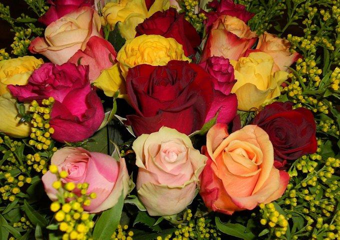 roses-293888_1280