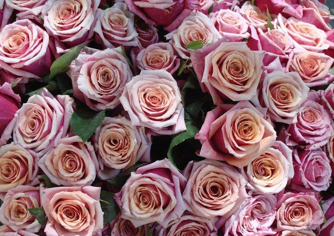 roses-535828_1280