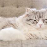 猫の気持ちは「しぐさ」でわかる!「大あくび」はリラックス状態じゃないって知ってた?