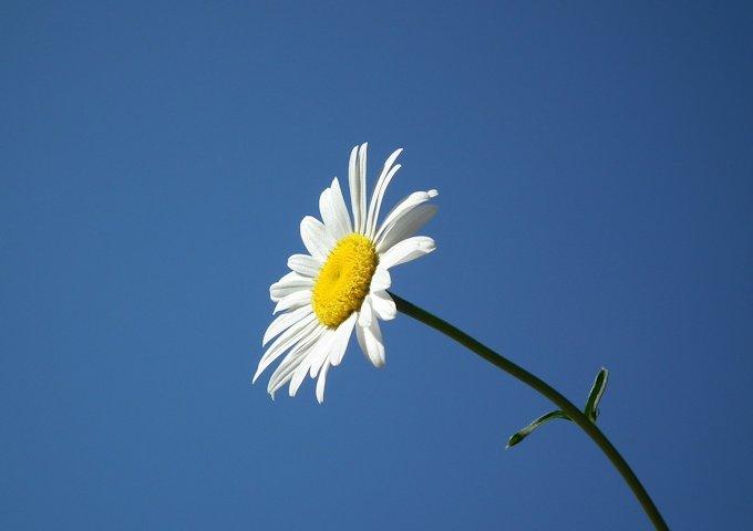flower-193452_1280