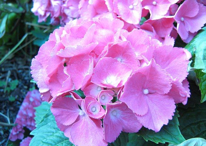 flower-4654_1280