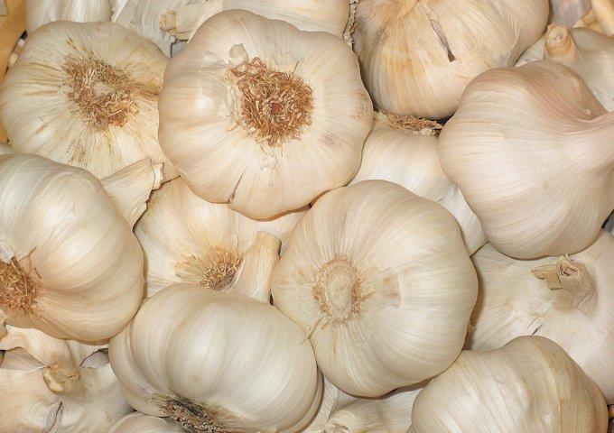 garlic-968372_1280