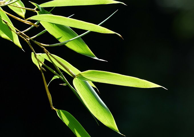 bamboo-167285_1280