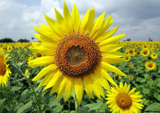 flower-204161_1280