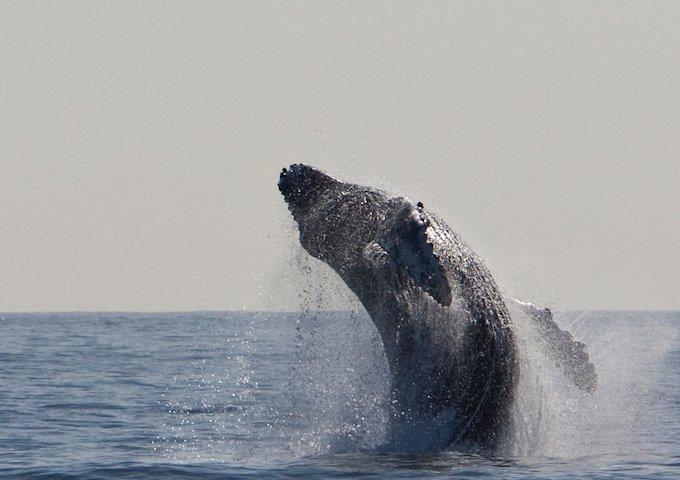 humpback-whale-1324633_1280