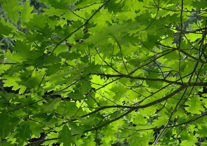 leaves-195672_1280