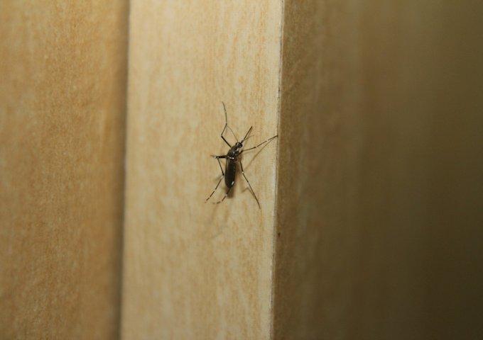 mosquito-347201_1280