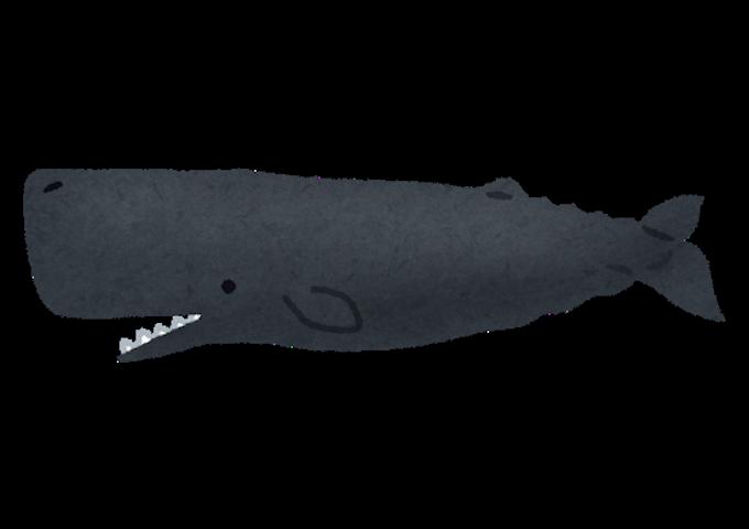 whale_04_makkoukujira