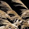 秋の七草の覚え方は歌と語呂合わせで!サクっと覚えよう、秋の七草!