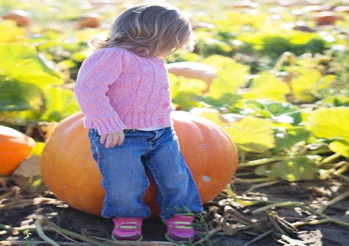 giant-pumpkins-955603_1280