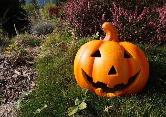 pumpkin-980587_1280