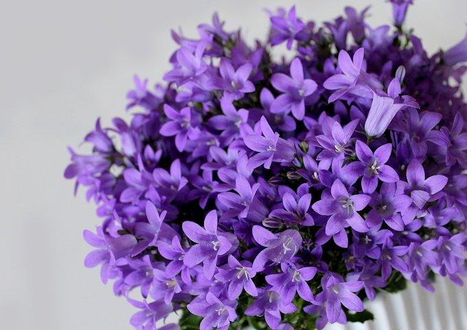 6-鉢植え (2)