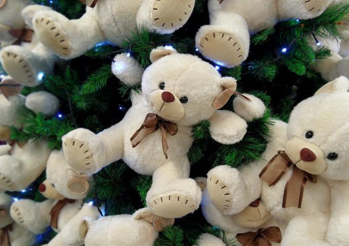bear-cub-582948_1280