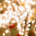 昭和記念公園でクリスマス!2016年の混雑予想・花火ポイント攻略総まとめ!