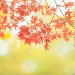 嵐山もみじ祭2016!今年の開催日はみどころは?雨天の場合はどうなる?