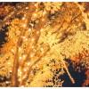 京都ロームイルミネーション2016!周辺駐車場情報・見どころガイド!