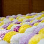 二本松菊人形祭り2016!歴史とみどころ総まとめ!菊人形の作り方は?