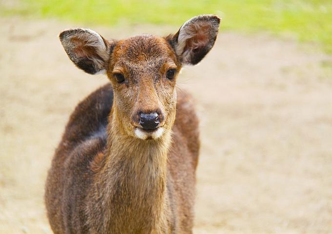 deer-224168_1280