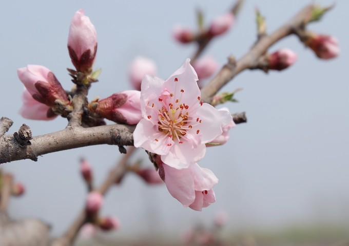 spring-804533_1280