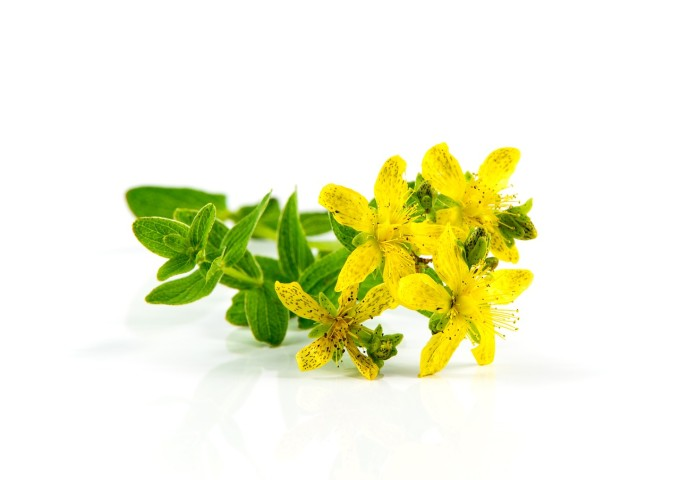 herb-st-johns-wort-1541346_1280