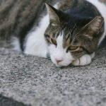 冬に猫を留守番させることの注意点は?ケージの寒さ対策や暖房は安全?