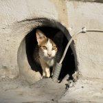 迷い猫を保護したら連絡先は保健所?警察?チラシの作り方・貼り方は?