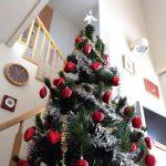 クリスマスツリーは本物のもみの木で!どこで販売してる?選び方は?
