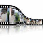 猫が主人公の映画のおすすめ4本!【邦画】猫好きなら必ずみておこう!