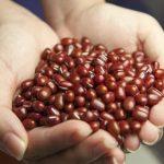 小豆の賞味期限は30年?正しい保存方法は?茹で豆は冷凍OK?