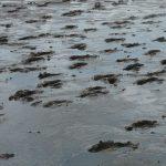 鹿島ガタリンピック2018!大人も子供も泥だらけで本気で遊べる1日のみどころ解説!