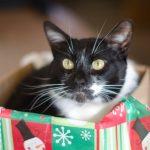 猫にあげたいクリスマスプレゼント!リッチなキャットフード4選!