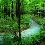 都心から電車でいける!おすすめの関東森林浴スポット3選!森林浴の正しいやり方は?