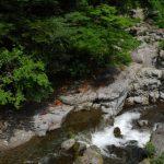 日帰りでいける!おすすめの東京森林浴スポット3選!森林浴の正しいやり方は?