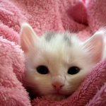 はじめての猫!冬の対策はどうしたらいい?部屋の温度は?