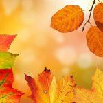 秋に聞こえてくる虫の声の種類はいくつ?秋の虫を飼育方法は?