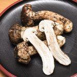 松茸狩りなら岐阜で決まり!一生分食べたい!おすすめの松茸狩りスポット3選!
