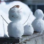 【大雪対策保存版】雪かきのコツの疑問解決!お湯はNGなの?凍結している場合は?雪かきのタイミングは?